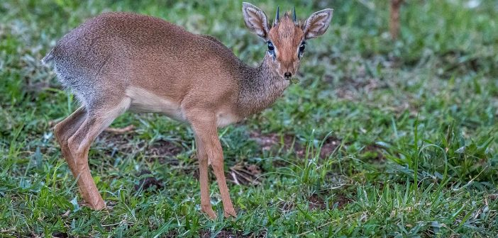 Animali africani elenco: foto